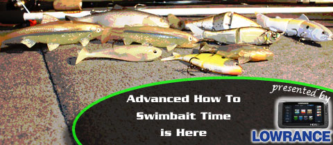 Swimbait-Time-is-Here-MainImage