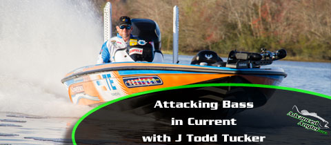J-Todd-Tucker-Attacking-Bass-in-Current-Main-Image