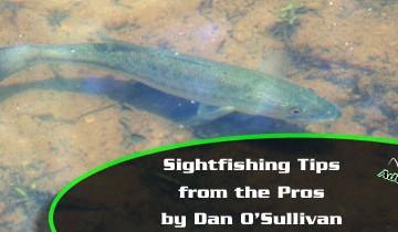 Pro-Tips-for-Sightfishing-Main-Image