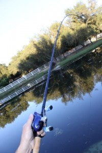 Ardent Denny Brauer Pro Series Rods Rod Taper