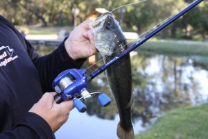 Ardent Denny Brauer Pro Series Rods The Results