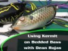 Using Kermit on Bedded Bass with Dean Rojas