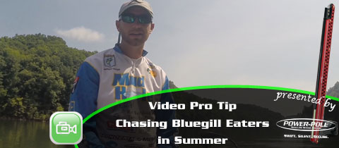 Video Pro Tip – Brandon Lester on Targeting Shallow Summer Bluegill Eaters