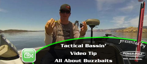 Video Tip – All About Buzzbaits with Matt Allen of Tactical Bassin