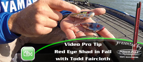 Strike King Pro Tips – Redeye Shad in Fall with Todd Faircloth