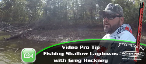 Video Pro Tip – Fishing Shallow Laydowns with Greg Hackney