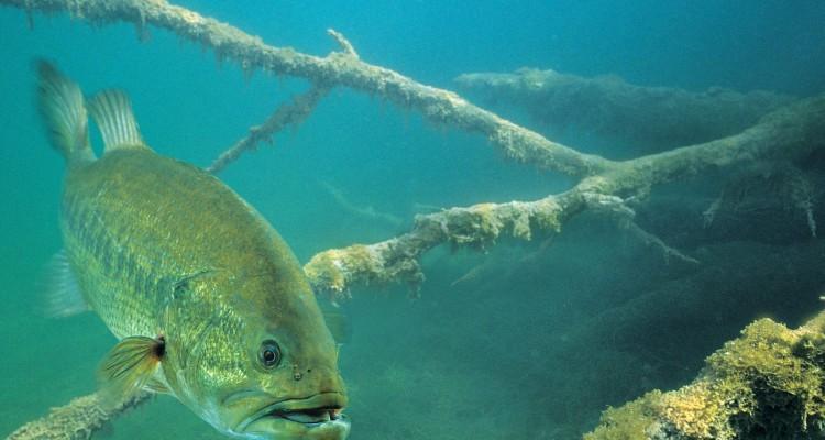 Bass Fishing Wallpaper Hd Advanced Angler Bass Fishing News Bassmaster Flw Outdoors